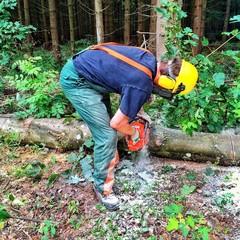 Waldarbeiter bei der Arbeit im Wald
