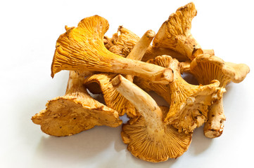 Group of fresh chanterelles on the white background.