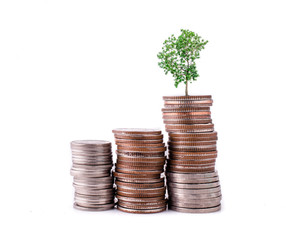 money coins pile and young tree on white background