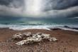 stormy rocky coast in ocean