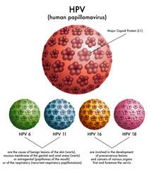 HPV (papilloma virus umano)
