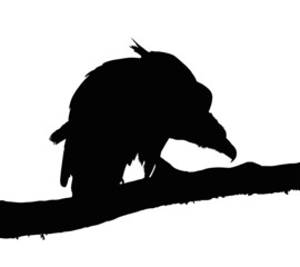 Portrait Silhouette of Large Vulture on Branch
