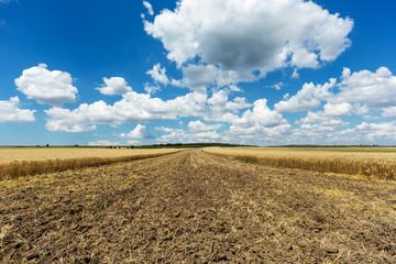 Landwirtschaft, Acker mit Quellwolken