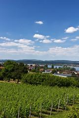 Insel Reichenau - Blick über den Bodensee von Hochwart 2