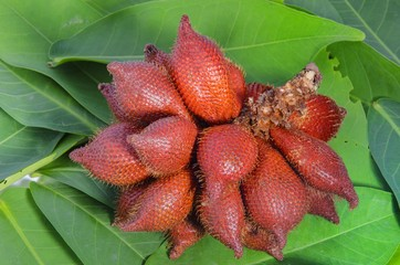 Cluster of ripe Salak on leaf background