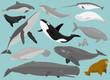 Marine Mammals - 67630276