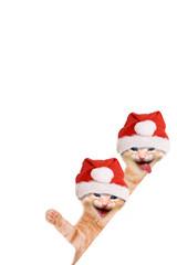Zwei Katzen lachend und winkend mit Weihnachtsmütze