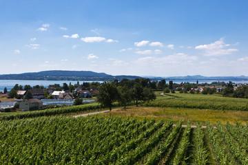 Insel Reichenau - Blick über den Bodensee von Hochwart 3