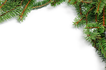 frame of fir twigs