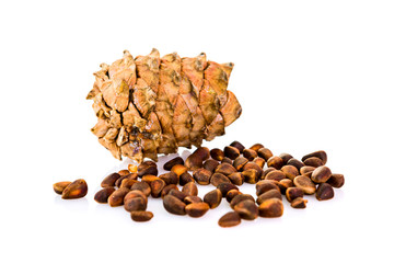 cedar pine cone with nuts isolated on white background