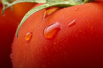 Red tomato and drops water close up