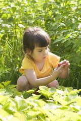 Девочка собирает ягоды клубники