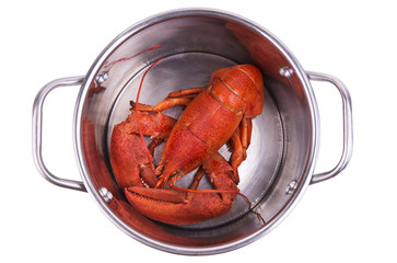 Lobster in pot