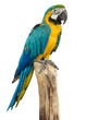 Beautyful macaw bird isolated on white background, clipping path - 67651265
