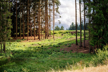 rural scene with forest