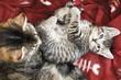 Kätzchen auf Decke liegen