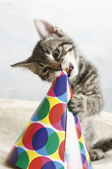 Kätzchen spielt mit Karneval Hut