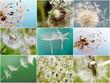 Collage: Ich wünsche mir ....    :)