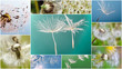 Collage: Ich wünsche mir .... Träumereien :)