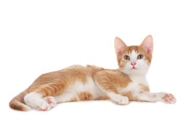 Rot weißes Katzenbaby seitlich liegend