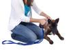 Frau leint Hund an
