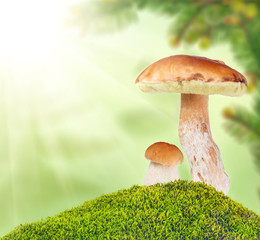 two ceps in moss on light background