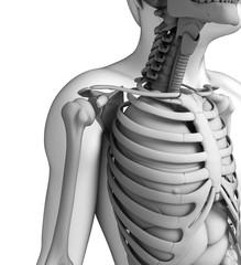 Human shoulder artwork