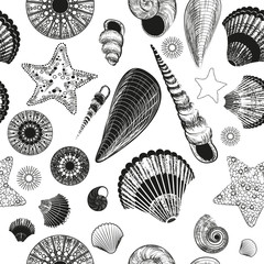 seamless pattern with seashells (black and white)