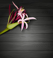 Tropical flowers on a wooden background