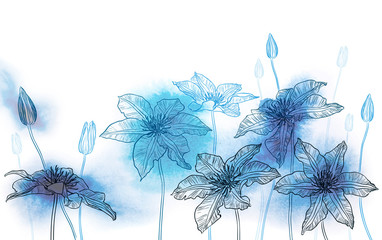 Clematis flowers on watercolor background