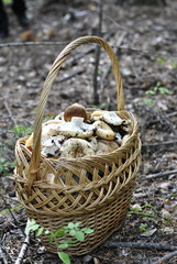 large wicker basket with mushrooms