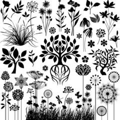 Botany collection III