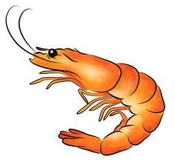 Illustration of Shrimp