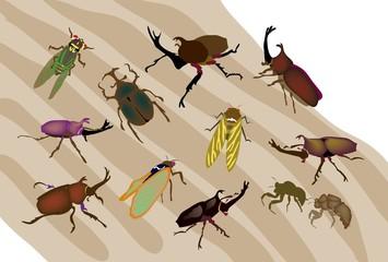 蝉やカブトムシやクワガタムシの夏の昆虫