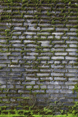 old mossy brick wall