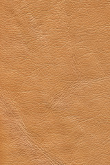 Old Cowhide Creased Crumpled Grunge Texture Sample - Detail