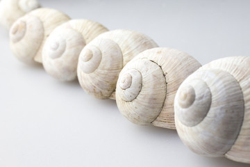 Roman snail shells on a white background
