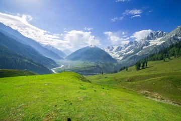 landscape Mountainand Field