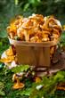 Leinwanddruck Bild - Mushrooms