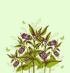 Background with bellflower