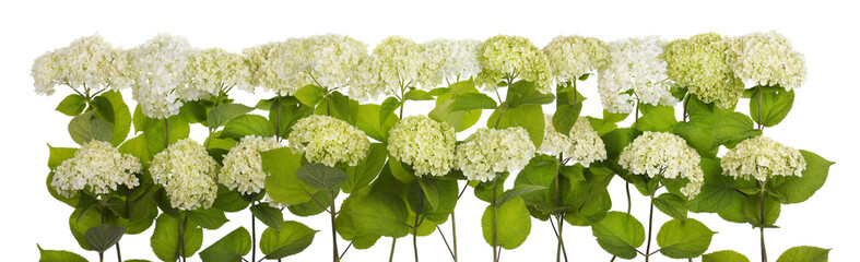 Mourning white and green flowers line isolated