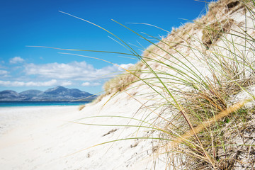 sunny beach with sand dunes, tall grass and blue sky