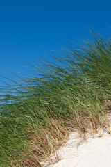 Sand dunes with tall grass and blue sky, Scotland