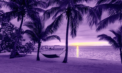 palm trees and hammock on tropical beach