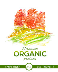 Watercolor drawing elements for organic food