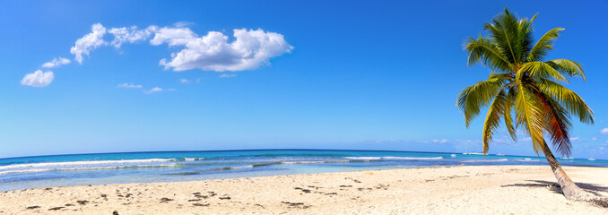 Panoramic view of white sand beach with palm
