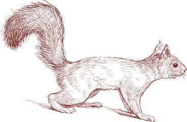 nimble squirrel