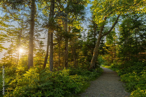 canvas print picture Warren lake path