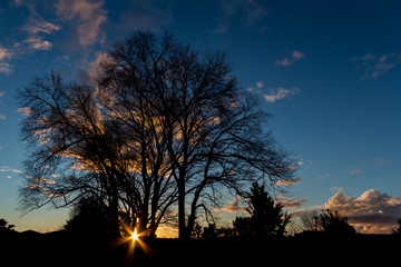 Sunsetting Winter Trees