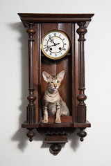 Smart tricky winking kitten sit in the clocks